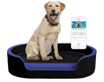Product design for cooler pet beds. Literally.