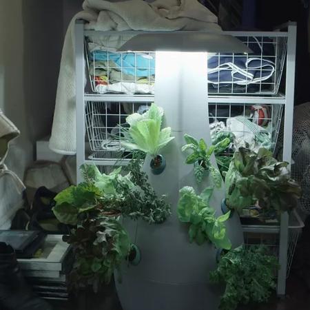 Botanical Gardens of Ful Mics House Improve